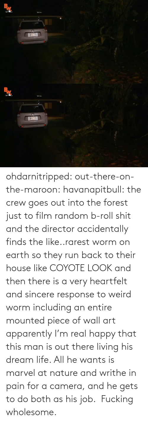 accidentally: ohdarnitripped:  out-there-on-the-maroon:  havanapitbull: the crew goes out into the forest just to film random b-roll shit and the director accidentally finds the like..rarest worm on earth so they run back to their house like COYOTE LOOK and then there is a very heartfelt and sincere response to weird worm including an entire mounted piece of wall art apparently I'm real happy that this man is out there living his dream life. All he wants is marvel at nature and writhe in pain for a camera, and he gets to do both as his job.    Fucking wholesome.