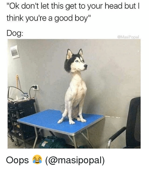 """Head, Memes, and Good: Ok don't let this get to your head but l  think you're a good boy""""  Dog:  @MasiPopal Oops 😂 (@masipopal)"""