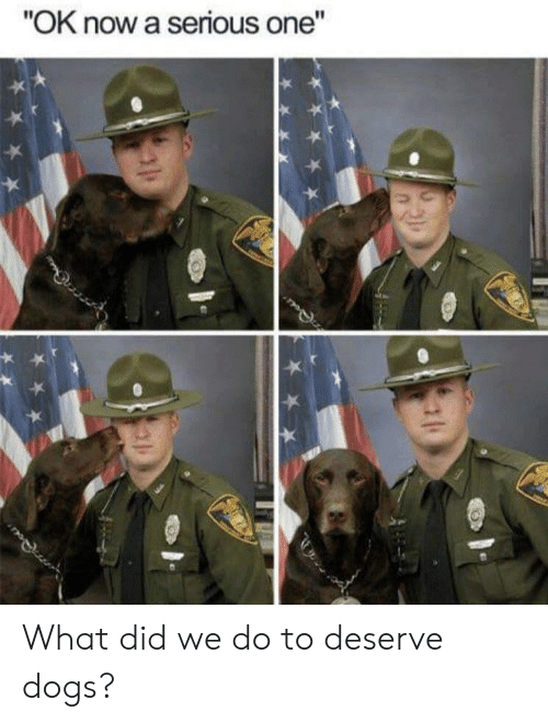 """Dogs, One, and Did: """"OK now a serious one"""" What did we do to deserve dogs?"""