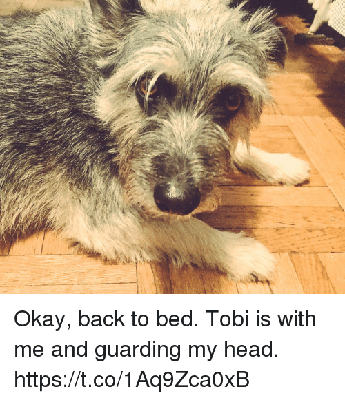 Head, Memes, and Okay: Okay, back to bed. Tobi is with me and guarding my head. https://t.co/1Aq9Zca0xB
