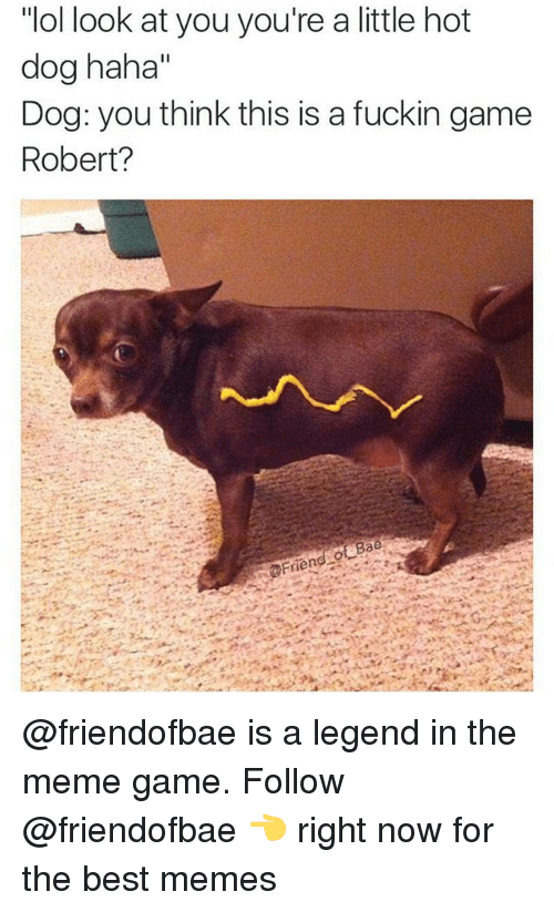 """Meme Games: """"ol look at you you're a little hot  dog haha""""  Dog: you think this is a fuckin game  Robert? @friendofbae is a legend in the meme game. Follow @friendofbae 👈 right now for the best memes"""