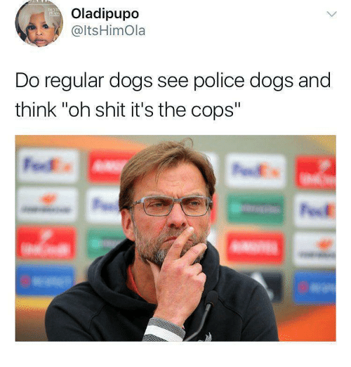 "Dogs, Police, and Shit: Oladipupo  @ltsHimOla  Do regular dogs see police dogs and  think ""oh shit it's the cops"""