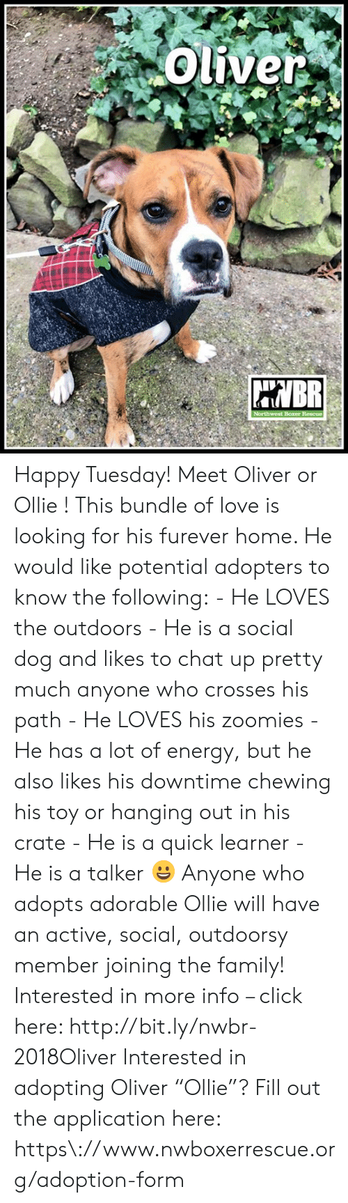 """Click, Energy, and Family: Oliver  BR  Northwest Boxer Rescue Happy Tuesday! Meet Oliver or Ollie !  This bundle of love is looking for his furever home.  He would like potential adopters to know the following:  - He LOVES the outdoors - He is a social dog and likes to chat up pretty much anyone who crosses his path - He LOVES his zoomies - He has a lot of energy, but he also likes his downtime chewing his toy or hanging out in his crate - He is a quick learner - He is a talker 😀  Anyone who adopts adorable Ollie will have an active, social, outdoorsy member joining the family!  Interested in more info – click here: http://bit.ly/nwbr-2018Oliver  Interested in adopting Oliver """"Ollie""""? Fill out the application here: https\://www.nwboxerrescue.org/adoption-form"""