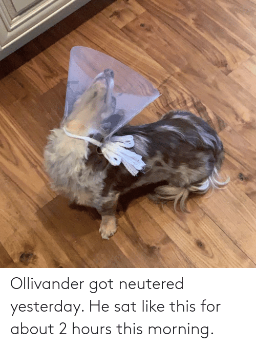 sat: Ollivander got neutered yesterday. He sat like this for about 2 hours this morning.