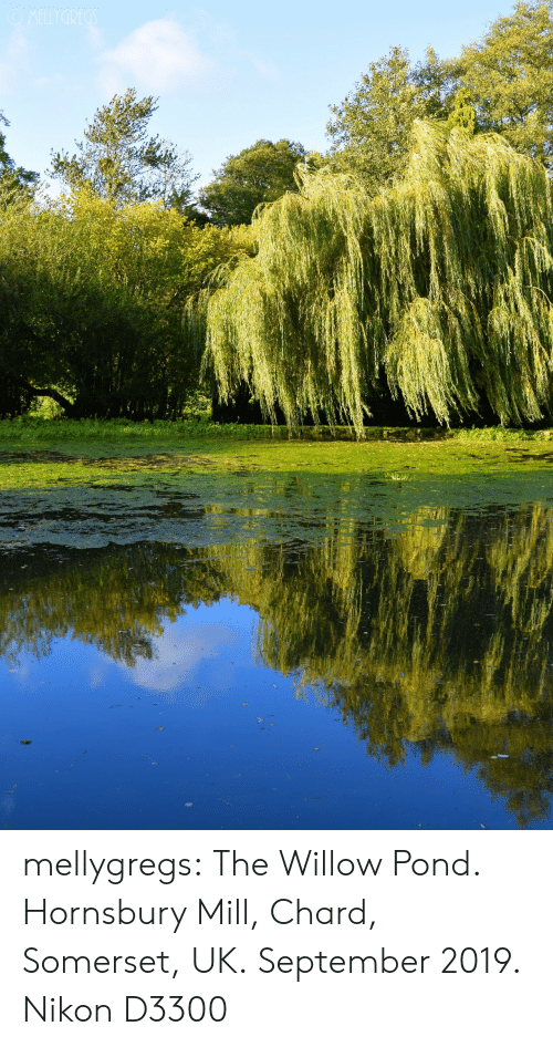 Tumblr, Blog, and Nikon: OMELLYGREGS mellygregs: The Willow Pond. Hornsbury Mill, Chard, Somerset, UK. September 2019. Nikon D3300