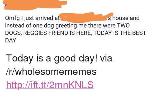 "Today Is A Good Day: Omfg I just arriveda  instead of one dog greeting me there were TWO  DOGS, REGGIES FRIEND IS HERE, TODAY IS THE BEST  DAY  s house and <p>Today is a good day! via /r/wholesomememes <a href=""http://ift.tt/2mnKNLS"">http://ift.tt/2mnKNLS</a></p>"