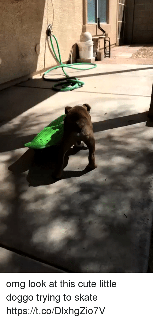 Cute, Omg, and Girl Memes: omg look at this cute little doggo trying to skate  https://t.co/DlxhgZio7V