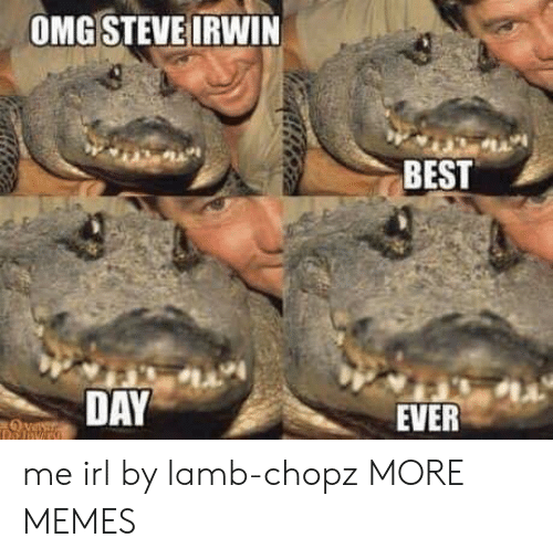 Dank, Memes, and Omg: OMG STEVE IRWIN  BEST  1A  DAY  EVER me irl by lamb-chopz MORE MEMES