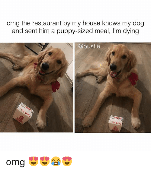 Memes, My House, and Omg: omg the restaurant by my house knows my dog  and sent him a puppy-sized meal, I'm dying  @bustle omg 😍😍😂😍
