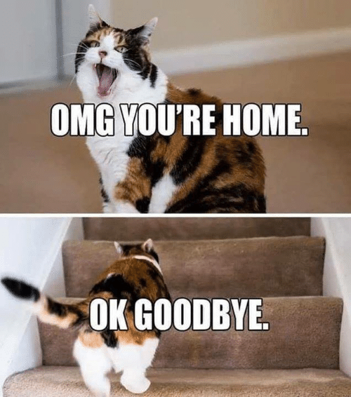 Memes, Omg, and Home: OMG YOU'RE HOME.  OK GOODBYE.