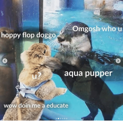 Wow, Doggo, and Aqua: Omgosh who u  hoppy flop doggo  3  aqua pupper  wow doin me a educate