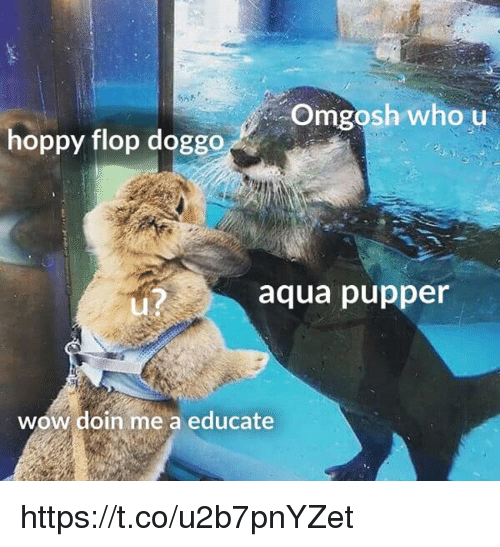 Memes, Wow, and 🤖: Omgosh who u  hoppy flop doggo  aqua pupper  Lu  wow doin me a educate https://t.co/u2b7pnYZet