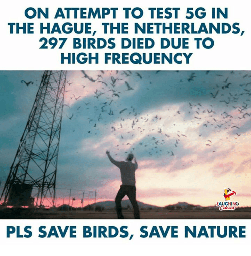 frequency: ON ATTEMPT TO TEST 5G IN  THE HAGUE, THE NETHERLANDS,  297 BIRDS DIED DUE TO  HIGH FREQUENCY  LAUGHING  PLS SAVE BIRDS, SAVE NATURE
