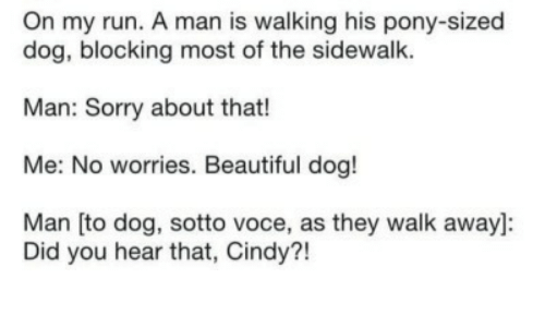 Beautiful, Run, and Sorry: On my run. A man is walking his pony-sized  dog, blocking most of the sidewalk.  Man: Sorry about that!  Me: No worries. Beautiful dog!  Man [to dog, sotto voce, as they walk away]:  Did you hear that, Cindy?!