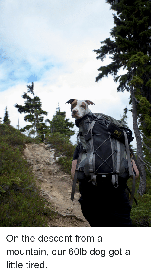 descent: On the descent from a mountain, our 60lb dog got a little tired.