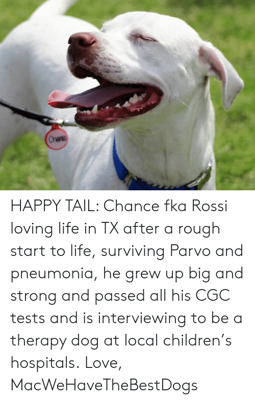 Children, Life, and Love: Onane HAPPY TAIL: Chance fka Rossi loving life in TX after a rough start to life, surviving Parvo and pneumonia, he grew up big and strong and passed all his CGC tests and is interviewing to be a therapy dog at local children's hospitals.  Love,  MacWeHaveTheBestDogs