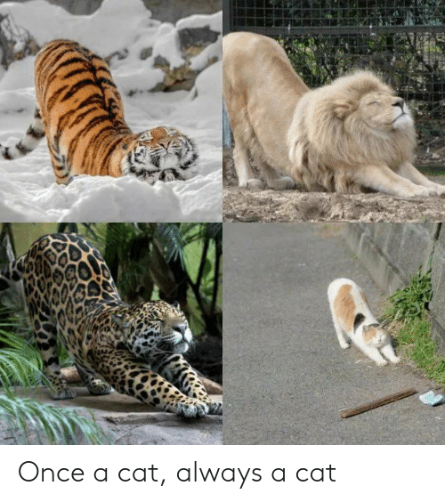 Cat, Once, and Always: Once a cat, always a cat