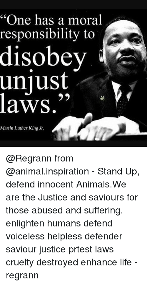 """one has a moral responsibility to disobey unjust laws: """"One has a moral  responsibility to  disobey  unjust  laws.""""  Martin Luther King Jr. @Regrann from @animal.inspiration - Stand Up, defend innocent Animals.We are the Justice and saviours for those abused and suffering. enlighten humans defend voiceless helpless defender saviour justice prtest laws cruelty destroyed enhance life - regrann"""