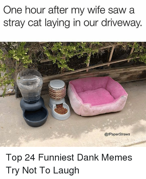 Funniest Dank: One hour after my wife saw a  stray cat laying in our driveway.  @fPaperStraws Top 24 Funniest Dank Memes Try Not To Laugh