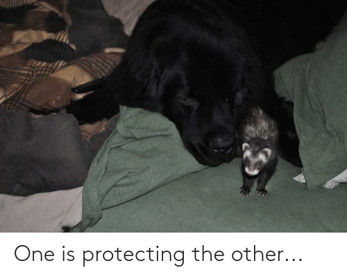 protecting: One is protecting the other...