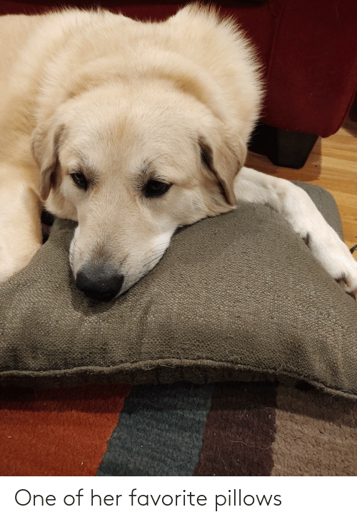 pillows: One of her favorite pillows