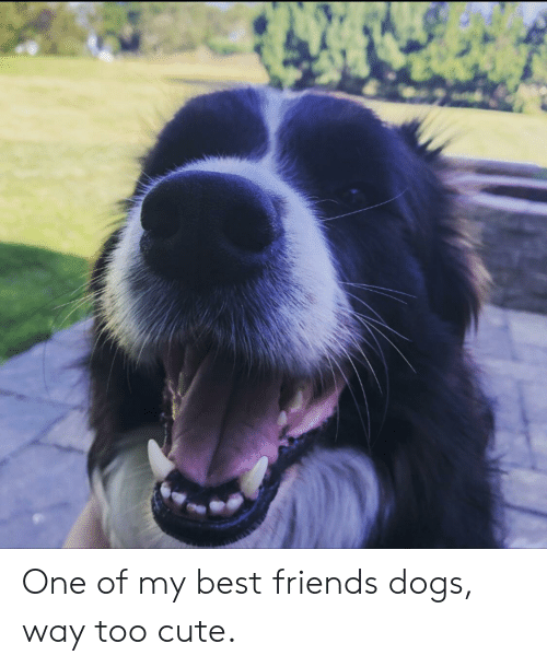 Cute, Dogs, and Friends: One of my best friends dogs, way too cute.