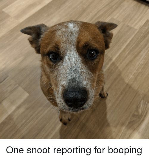 One, For, and Reporting
