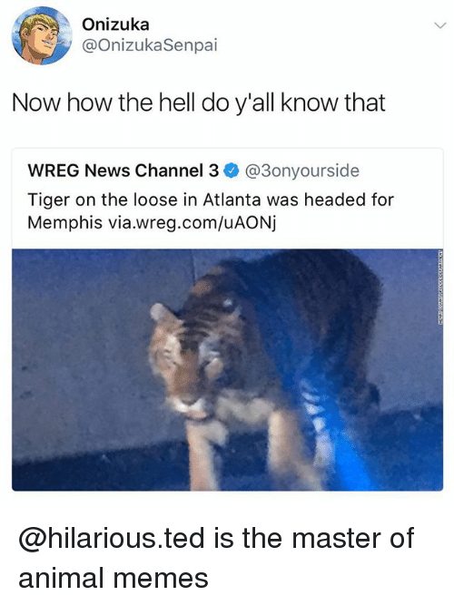 channeling: Onizuka  @OnizukaSenpai  Now how the hell do y'all know that  WREG News Channel 3ネ@3onyourside  Tiger on the loose in Atlanta was headed for  Memphis via.wreg.com/uAONj @hilarious.ted is the master of animal memes