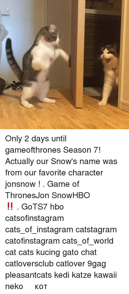 Favorite Character: Only 2 days until gameofthrones Season 7! Actually our Snow's name was from our favorite character jonsnow ! . スノーくんは、ドラマ「Game of Thrones」にある、パパとママが一番好きな登場人物Jon Snowの名前で名付けられました。いよいよ、明後日HBOがシーズン7の放送をスタートします!ワクワク‼️ . GoTS7 hbo catsofinstagram cats_of_instagram catstagram catofinstagram cats_of_world cat cats kucing gato chat catloversclub catlover 9gag pleasantcats kedi katze kawaii neko 고양이 кот แมว 猫