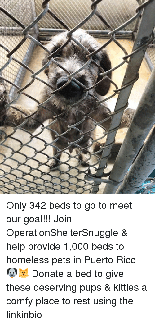 Homeless, Kitties, and Memes: Only 342 beds to go to meet our goal!!! Join OperationShelterSnuggle & help provide 1,000 beds to homeless pets in Puerto Rico 🐶🐱 Donate a bed to give these deserving pups & kitties a comfy place to rest using the linkinbio