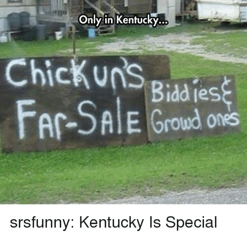 Tumblr, Blog, and Http: Only in Kentucky.  Chickuns giad es  AlE Groud ones srsfunny:  Kentucky Is Special