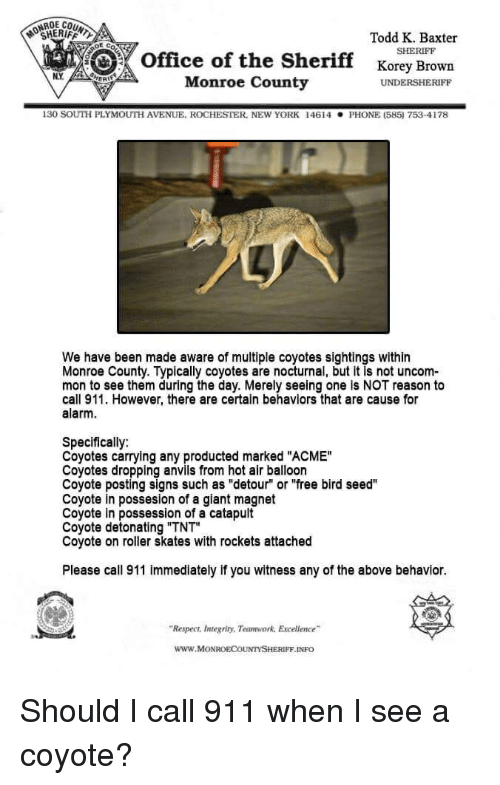 """Funny, Phone, and Respect: ONROE CO  SHERIFF  Todd K. Baxter  SHERIFF  Office of the Sheriff Korey Brown  Monroe County  UNDERSHERIFF  130 somi PLYMOUTH AVENUE. ROCHESTER, NEWYORK 14614  PHONE (585 753-4178  We have been made aware of multiple coyotes sightings within  Monroe County. Typically coyotes are nocturnal, but it is not uncom-  mon to see them during the day. Merely seeing one is NOT reason to  call 911. However, there are certain behaviors that are cause for  alarm.  Specifically:  Coyotes carrying any producted marked """"ACME""""  Coyotes dropping anvils from hot air balloon  Coyote posting signs such as """"detour"""" or """"free bird seed""""  Coyote in possesion of a giant magnet  Coyote in possession of a catapult  Coyote detonating """"TNT""""  Coyote on roller skates with rockets attached  Please call 911 immediately if you witness any of the above behavior  """"Respect, Integrity, Teamwork, Excellence  www.MONROECOUNTYSHERIFF.INFO Should I call 911 when I see a coyote?"""