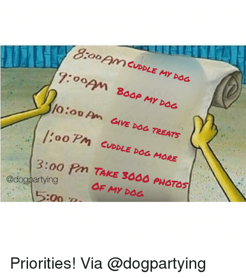Memes, Boop, and 🤖: oom CUDDLE MY DOG  BOOP MY DOG  /o  oo Pm CUDDLE DSG MORE  3:00 ?m TAKE 3606 PHOTOS  OF MY DOG  @dogpartying  :00 P Priorities! Via @dogpartying