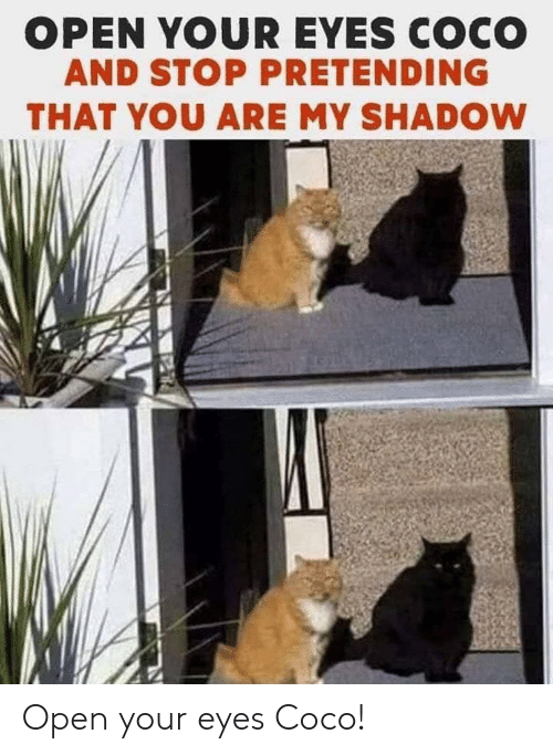 shadow: OPEN YOUR EYES COCO  AND STOP PRETENDING  THAT YOU ARE MY SHADOW Open your eyes Coco!