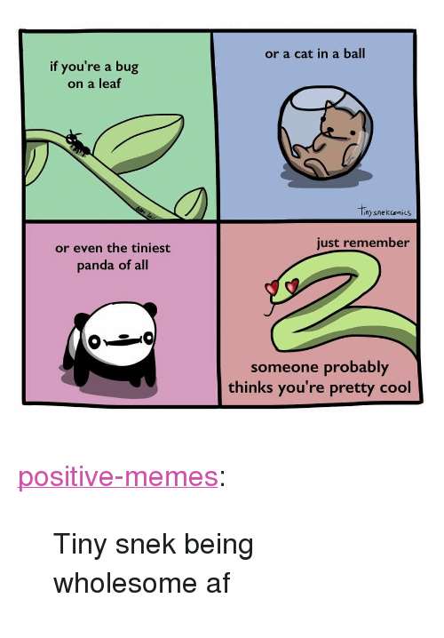 "Af, Memes, and Tumblr: or a cat in a ball  if you're a bug  on a leaf  nysnekcomics  just remember  or even the tiniest  panda of all  someone probably  thinks you're pretty cool <p><a href=""https://positive-memes.tumblr.com/post/167291493705/tiny-snek-being-wholesome-af"" class=""tumblr_blog"">positive-memes</a>:</p>  <blockquote><p>Tiny snek being wholesome af</p></blockquote>"