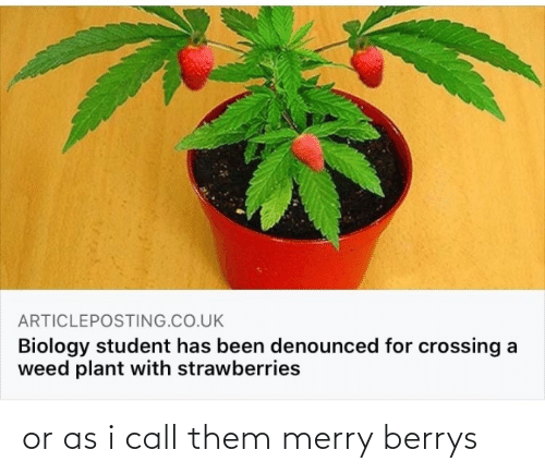 I Call: or as i call them merry berrys