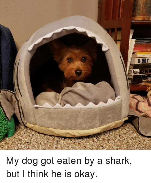 Shark, Okay, and Got: OR  FM T  D-DAY  DAYS T My dog got eaten by a shark, but I think he is okay.
