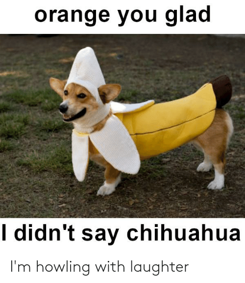 howling: orange you glad  I didn't say chihuahua I'm howling with laughter