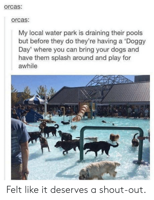 doggy: orcas:  orcas:  My local water park is draining their pools  but before they do they're having a Doggy  Day' where you can bring your dogs and  have them splash around and play for  awhile Felt like it deserves a shout-out.