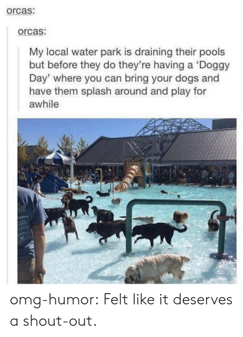 doggy: orcas:  orcas:  My local water park is draining their pools  but before they do they're having a Doggy  Day' where you can bring your dogs and  have them splash around and play for  awhile omg-humor:  Felt like it deserves a shout-out.