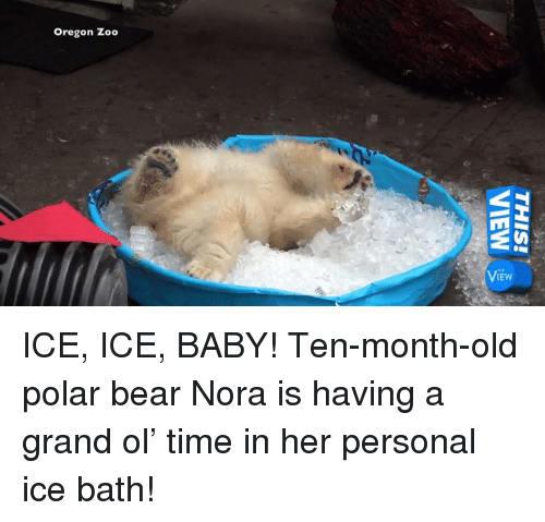 Memes, Ice Ice Baby, and Bear: Oregon Zoo  THIS!  VIEW-> ICE, ICE, BABY! Ten-month-old polar bear Nora is having a grand ol' time in her personal ice bath!