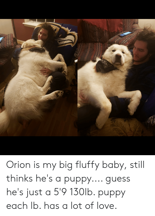 Love, Guess, and Puppy: Orion is my big fluffy baby, still thinks he's a puppy.... guess he's just a 5'9 130lb. puppy each lb. has a lot of love.