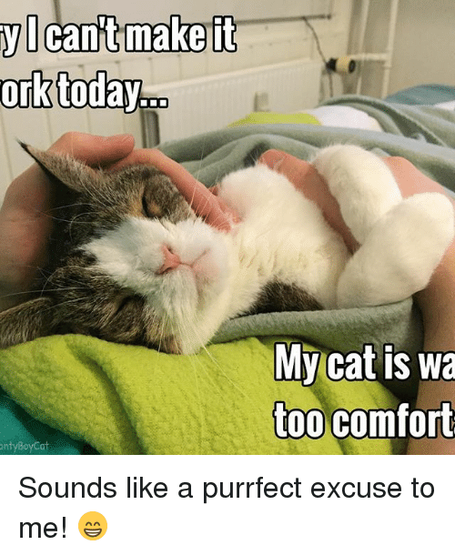 orks: ork  today  it  it  Cant make My cat is wa  too comfort  onty Boy Cat Sounds like a purrfect excuse to me! 😁