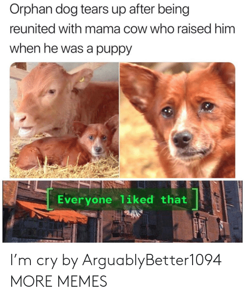 Reunited: Orphan dog tears up after being  reunited with mama cow who raised him  when he was a puppy  Everyone 1iked that I'm cry by ArguablyBetter1094 MORE MEMES