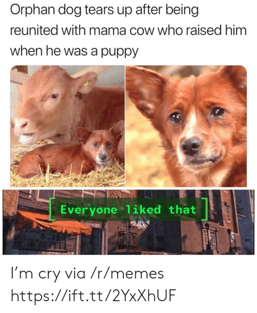 Reunited: Orphan dog tears up after being  reunited with mama cow who raised him  when he was a puppy  Everyone 1iked that I'm cry via /r/memes https://ift.tt/2YxXhUF