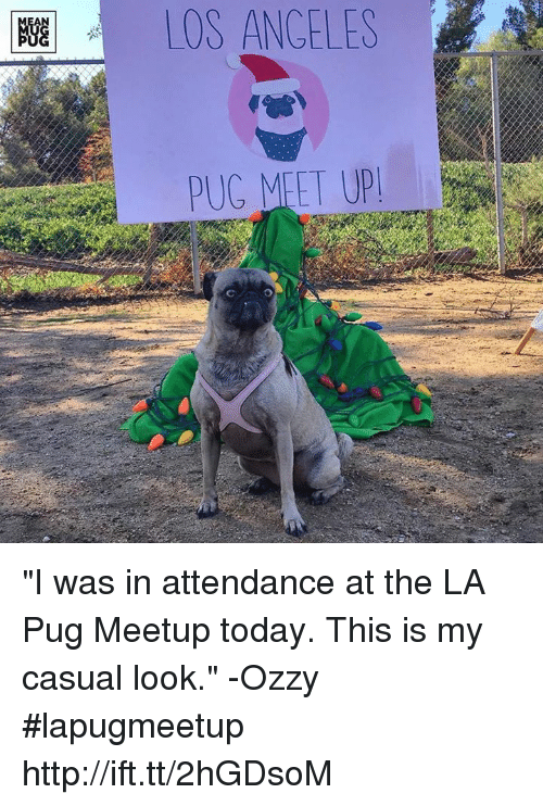 """Memes, Angel, and Angels: OS ANGELES """"I was in attendance at the LA Pug Meetup today. This is my casual look."""" -Ozzy #lapugmeetup http://ift.tt/2hGDsoM"""