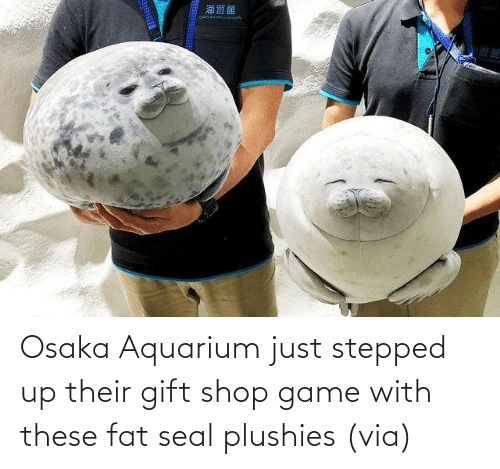 Fat: Osaka Aquarium just stepped up their gift shop game with these fat seal plushies (via)