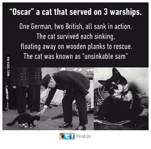 "germane: ""Oscar"" a cat that served on 3 warships.  One German, two British, all sank in action.  The cat survived each sinking  floating away on wooden planks to rescue.  s The cat was known as ""unsinkable sam  ET Postize"