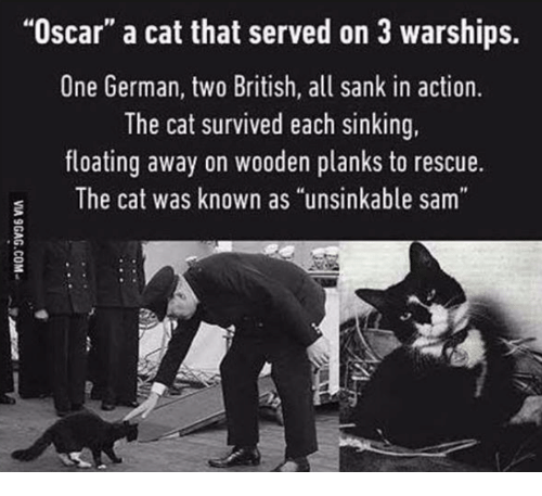 "Memes, British, and 🤖: ""Oscar"" a cat that served on 3 warships.  One German, two British, all sank in action.  The cat survived each sinking,  floating away on wooden planks to rescue.  The cat was known as ""unsinkable sam"""