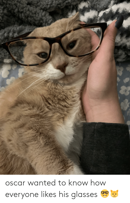 His Glasses: oscar wanted to know how everyone likes his glasses 🤓🐱